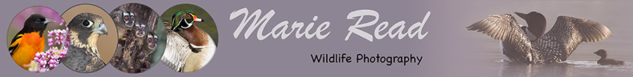 Marie Read Wildlife Photography